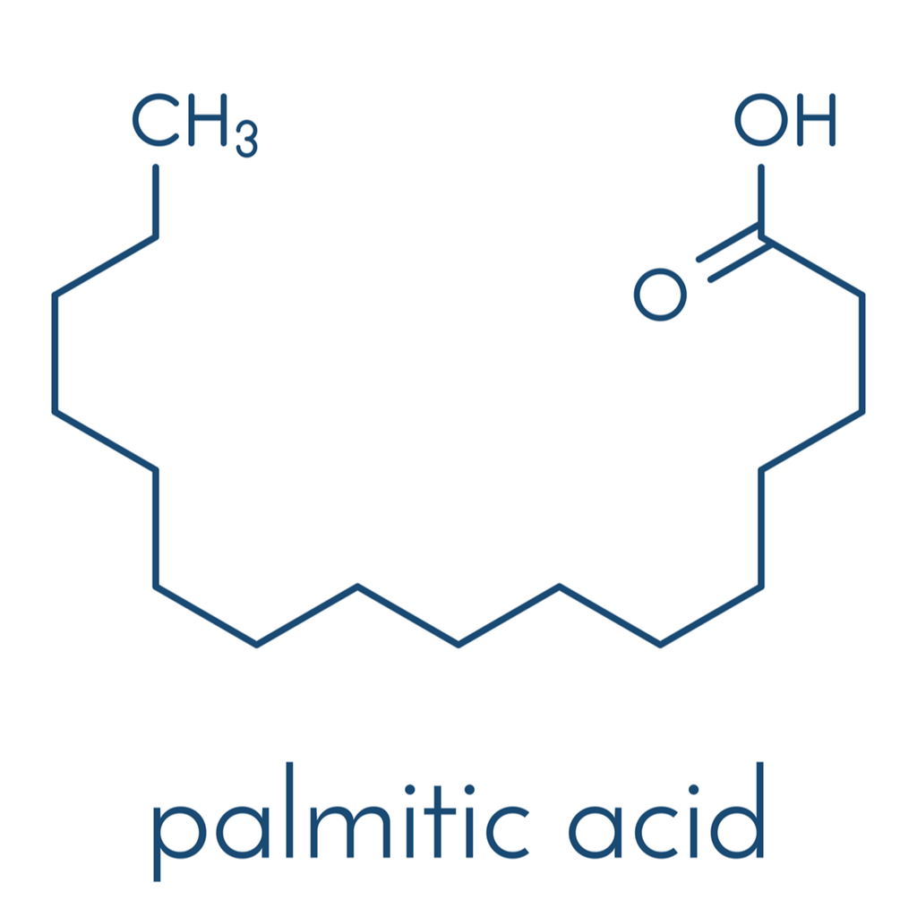 palmitic acid_pa 1.png